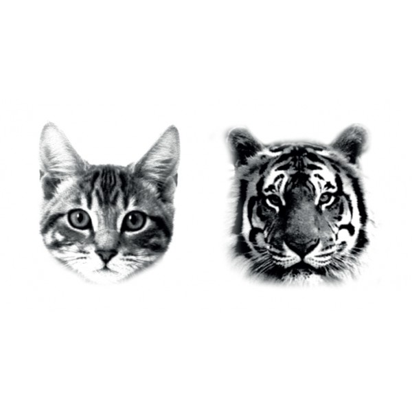 tatouages-cat-tiger-dcer