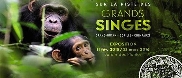 Sur la piste des grands singes