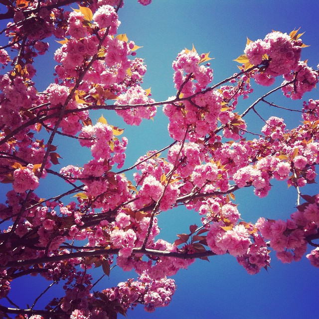 Spring! #parisjetaime #sun #bluesky #flower