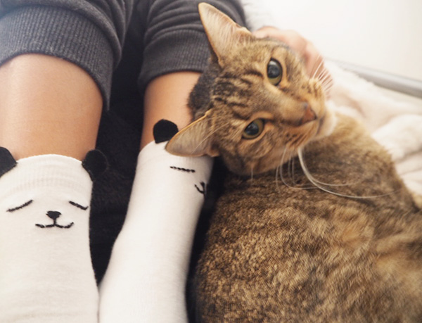 DIY animals socks