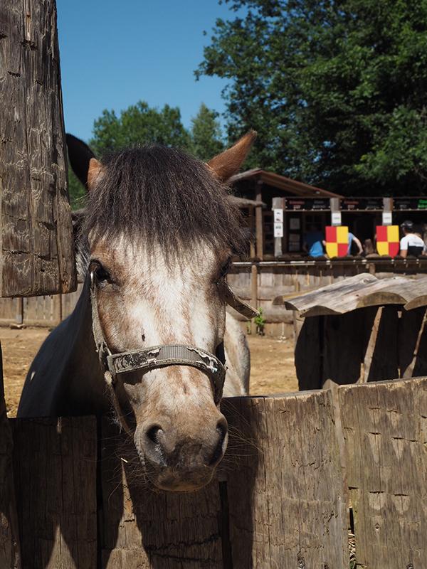 Sherwood Parc poney