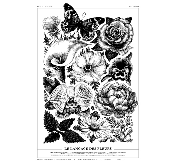 Amandine Delaunay Le langage des fleurs