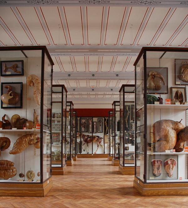 Le musée Fragonard